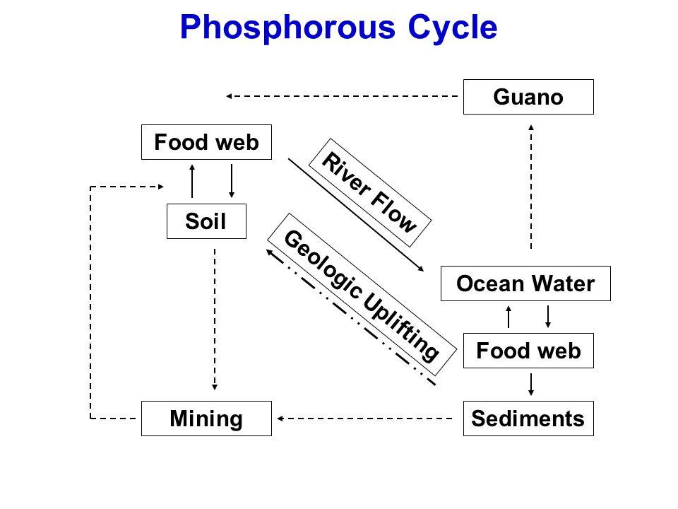 Food web Soil River Flow Ocean Water Food web Sediments Guano Mining Phosphorous Cycle Geologic Uplifting