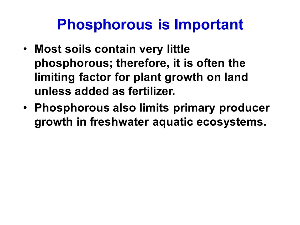 Phosphorous is Important Most soils contain very little phosphorous; therefore, it is often the limiting factor for plant growth on land unless added