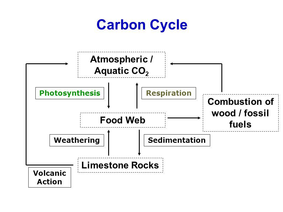 Atmospheric / Aquatic CO 2 Food Web PhotosynthesisRespiration Combustion of wood / fossil fuels Limestone Rocks Carbon Cycle SedimentationWeathering V