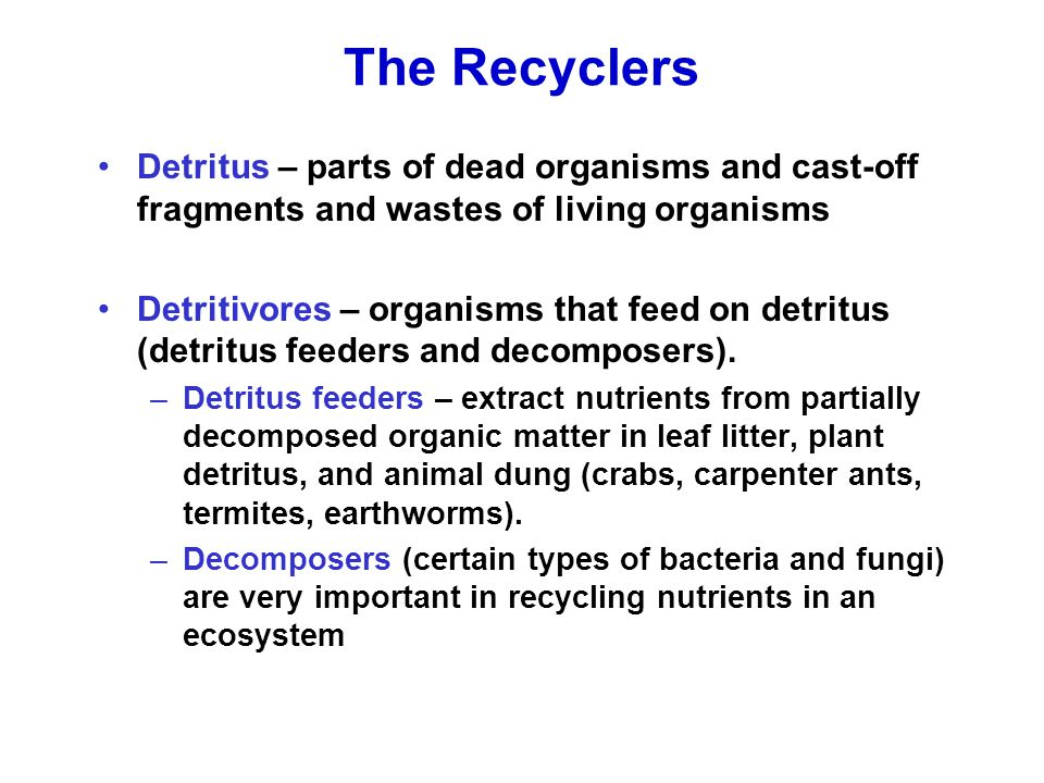 The Recyclers Detritus – parts of dead organisms and cast-off fragments and wastes of living organisms Detritivores – organisms that feed on detritus