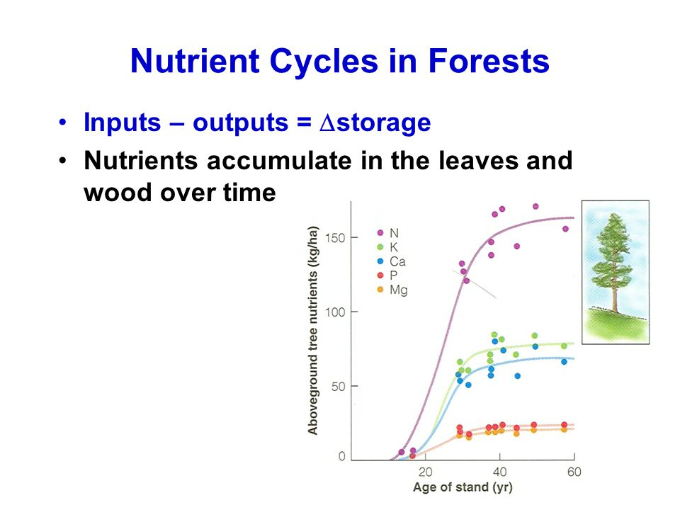 Nutrient Cycles in Forests Inputs – outputs =  storage Nutrients accumulate in the leaves and wood over time