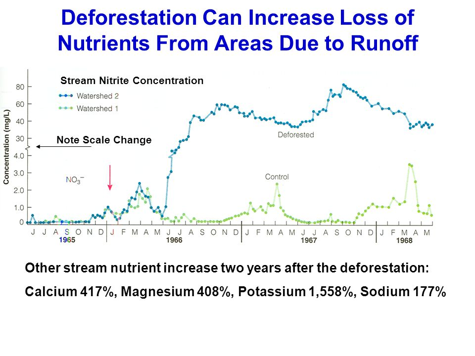 Deforestation Can Increase Loss of Nutrients From Areas Due to Runoff Note Scale Change Stream Nitrite Concentration Other stream nutrient increase tw