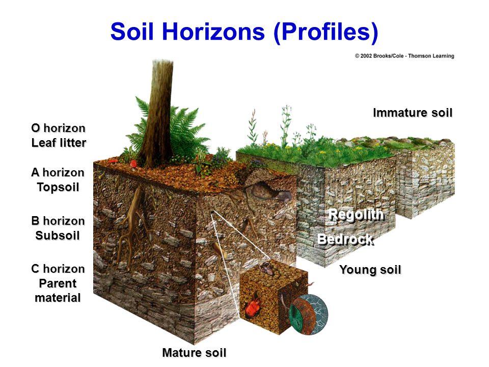 O horizon Leaf litter A horizon Topsoil B horizon Subsoil C horizon Parentmaterial Mature soil Young soil RegolithRegolith BedrockBedrock Immature soi