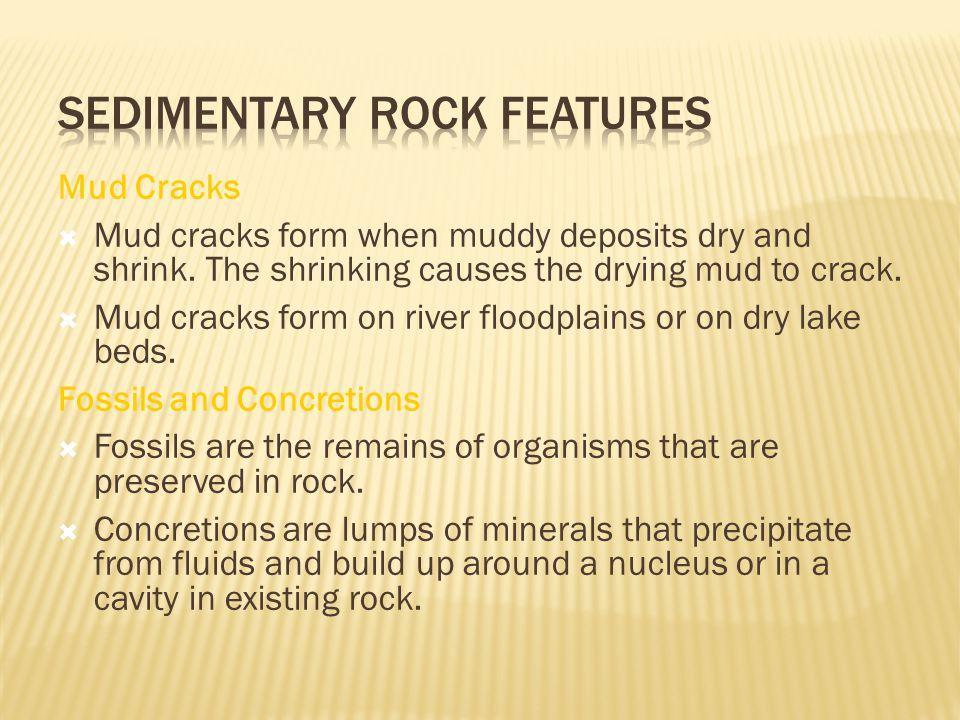 Mud Cracks  Mud cracks form when muddy deposits dry and shrink.