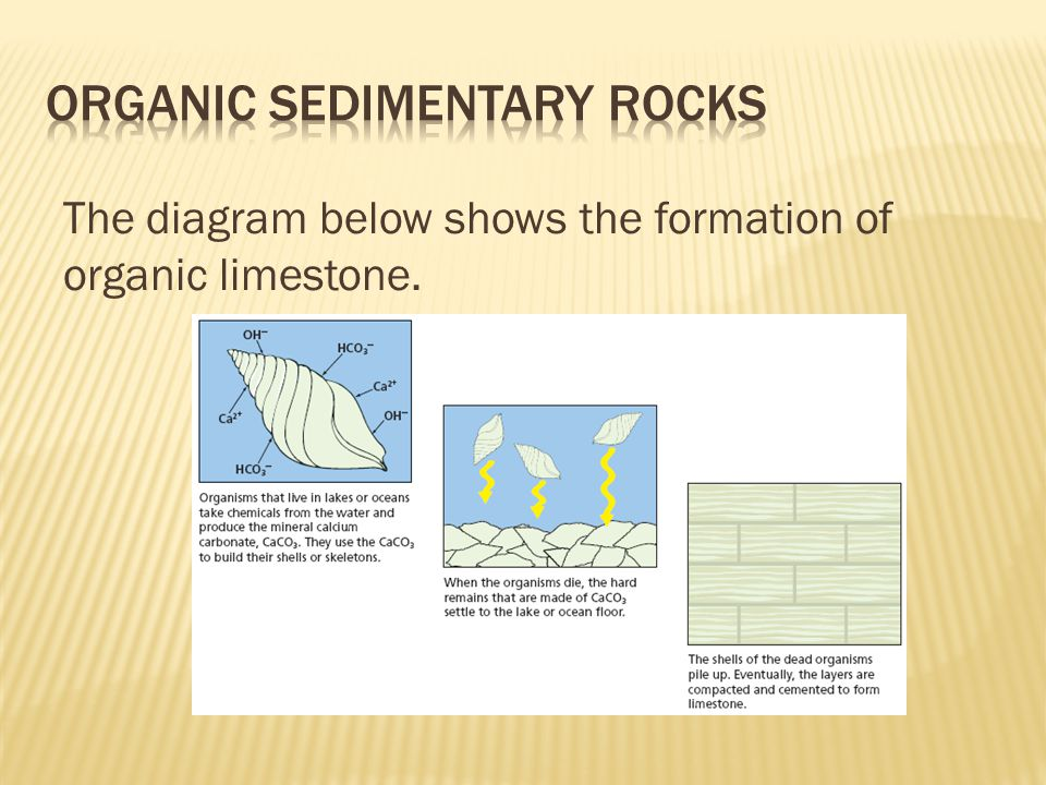 The diagram below shows the formation of organic limestone.