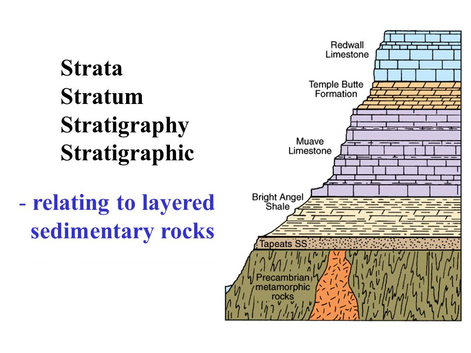 Strata Stratum Stratigraphy Stratigraphic - relating to layered sedimentary rocks