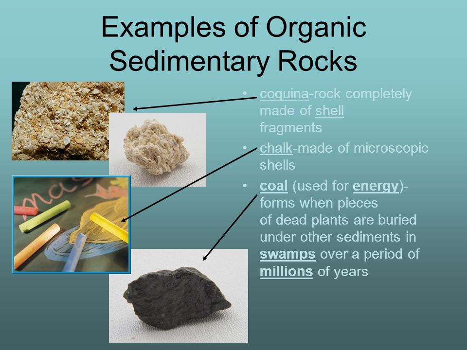 Examples of Organic Sedimentary Rocks coquina-rock completely made of shell fragments chalk-made of microscopic shells coal (used for energy)- forms when pieces of dead plants are buried under other sediments in swamps over a period of millions of years
