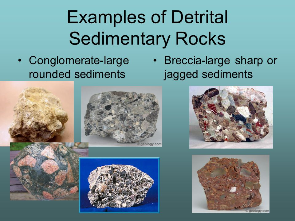 Examples of Detrital Sedimentary Rocks Conglomerate-large rounded sediments Breccia-large sharp or jagged sediments