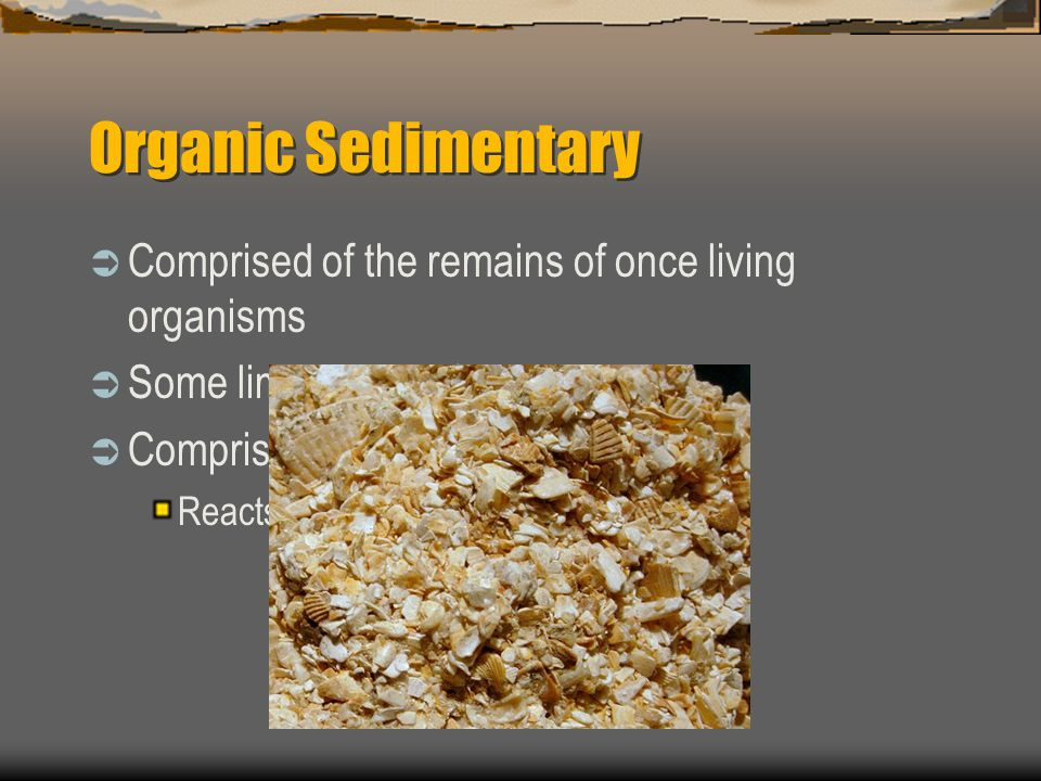 Organic Sedimentary  Comprised of the remains of once living organisms  Some limestone is formed this way  Comprised of Calcium Carbonate Reacts wi