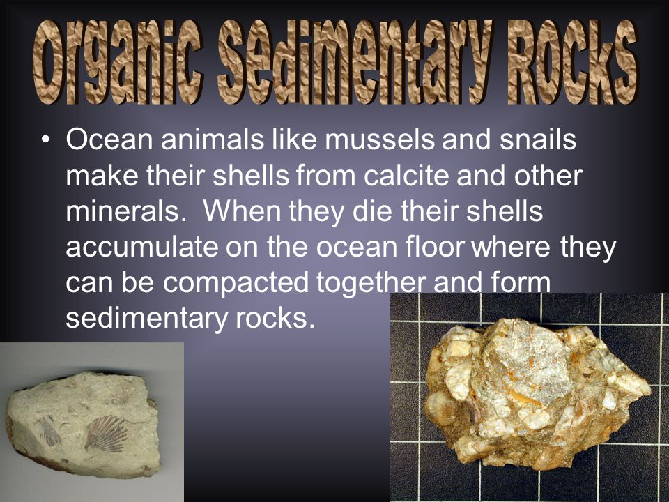 Organic sedimentary rocks have large amounts of remains known as fossils. –What are fossils? These rocks are classified as organic sedimentary rocks.