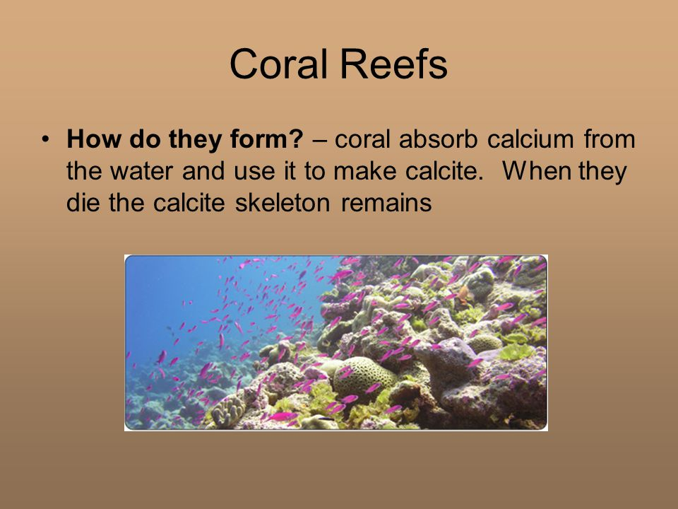 Coral Reefs How do they form. – coral absorb calcium from the water and use it to make calcite.