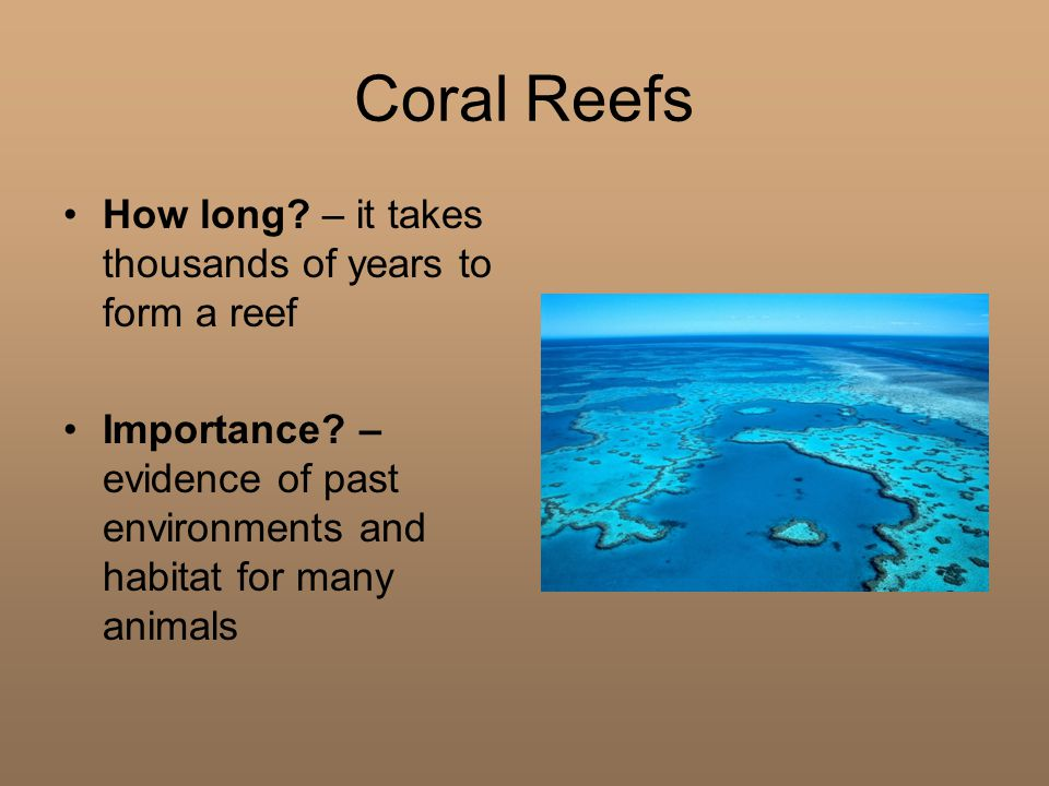 Coral Reefs How long. – it takes thousands of years to form a reef Importance.