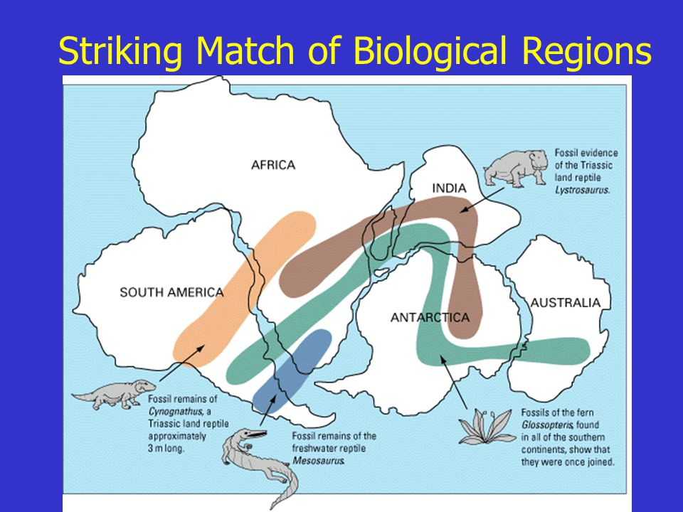 Striking Match of Biological Regions