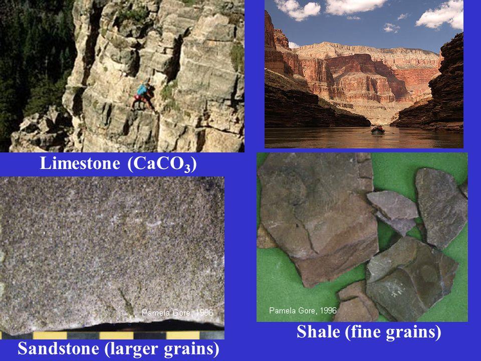 Sandstone (larger grains) Shale (fine grains) Limestone (CaCO 3 )