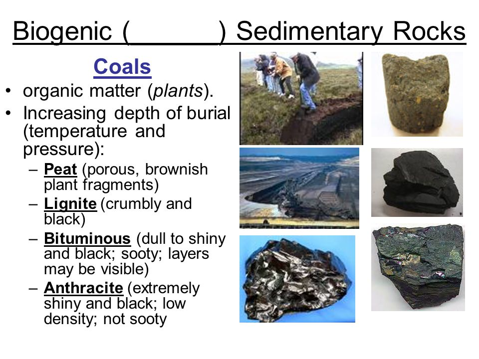 Biogenic (______) Sedimentary Rocks Coals organic matter (plants).