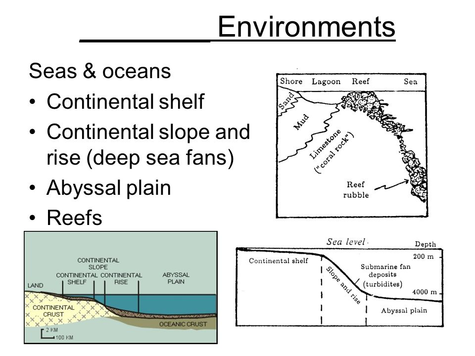 ________ Environments Seas & oceans Continental shelf Continental slope and rise (deep sea fans) Abyssal plain Reefs
