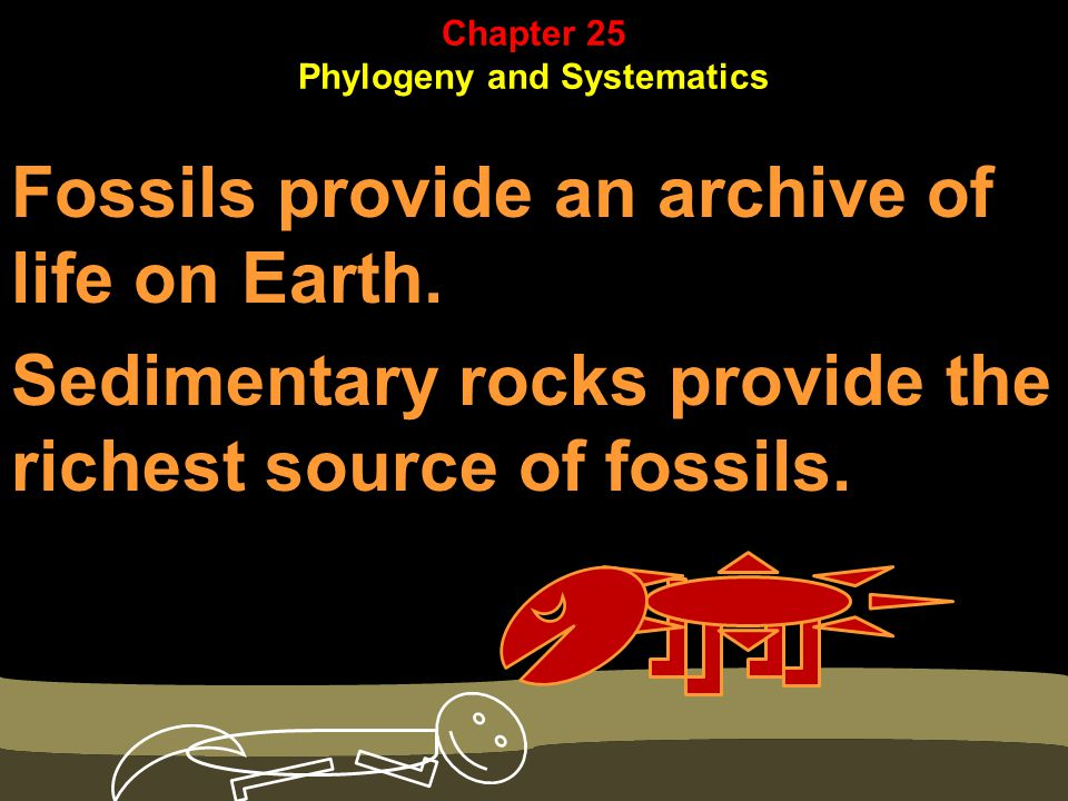 Fossils provide an archive of life on Earth.