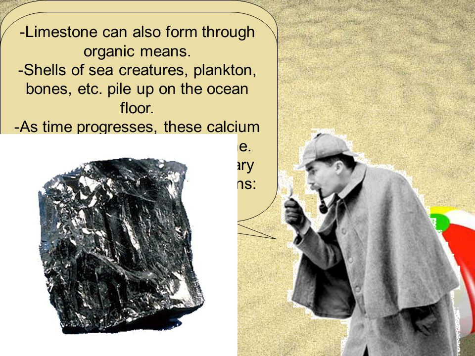 Now, there is one last type of sedimentary rock we should look at, and that is sedimentary rocks that form through organic means.