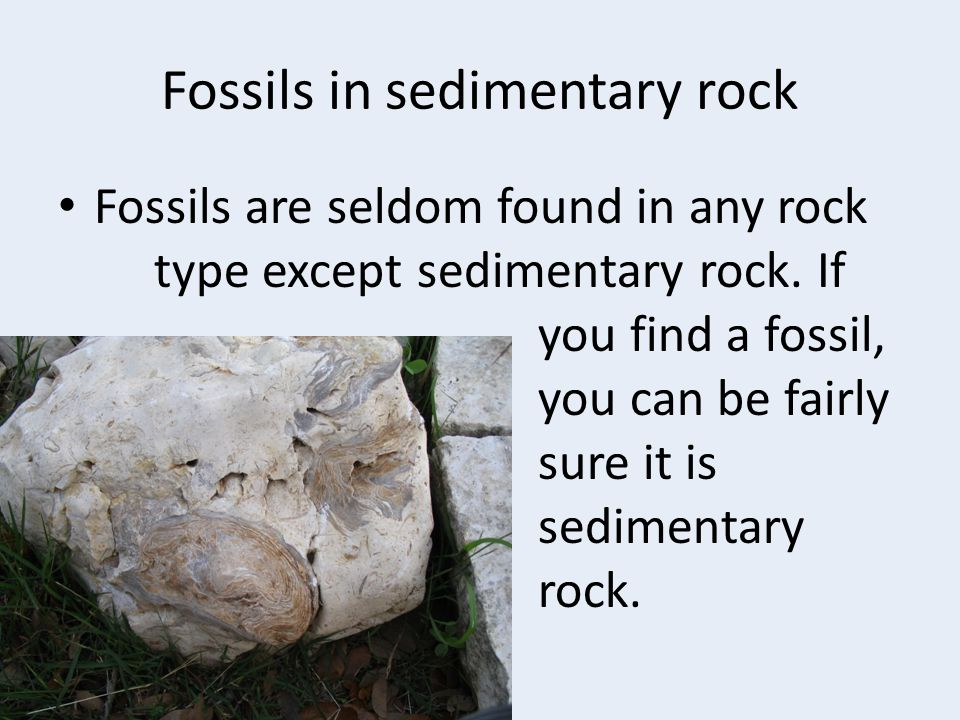 Fossils in sedimentary rock Fossils are seldom found in any rock type except sedimentary rock. If you find a fossil, you can be fairly sure it is sedi