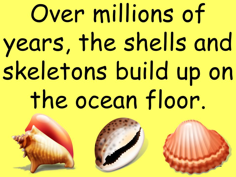 22 Over millions of years, the shells and skeletons build up on the ocean floor.