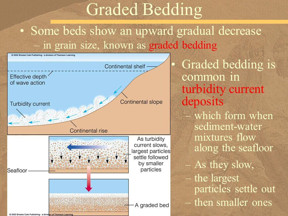 Some beds show an upward gradual decrease –in grain size, known as graded bedding Graded Bedding Graded bedding is common in turbidity current deposit