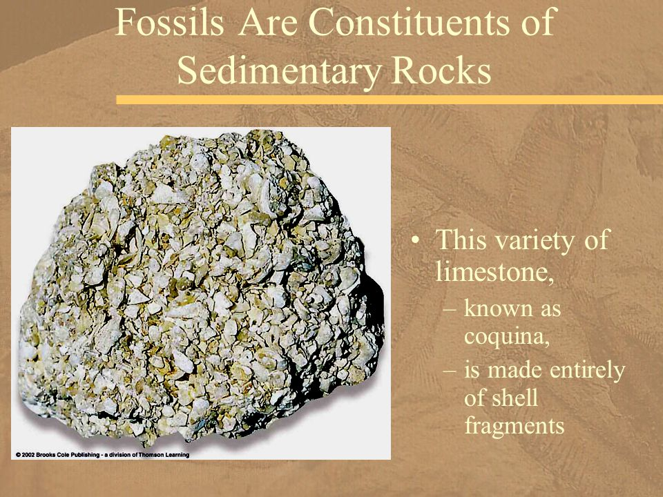 This variety of limestone, –known as coquina, –is made entirely of shell fragments Fossils Are Constituents of Sedimentary Rocks