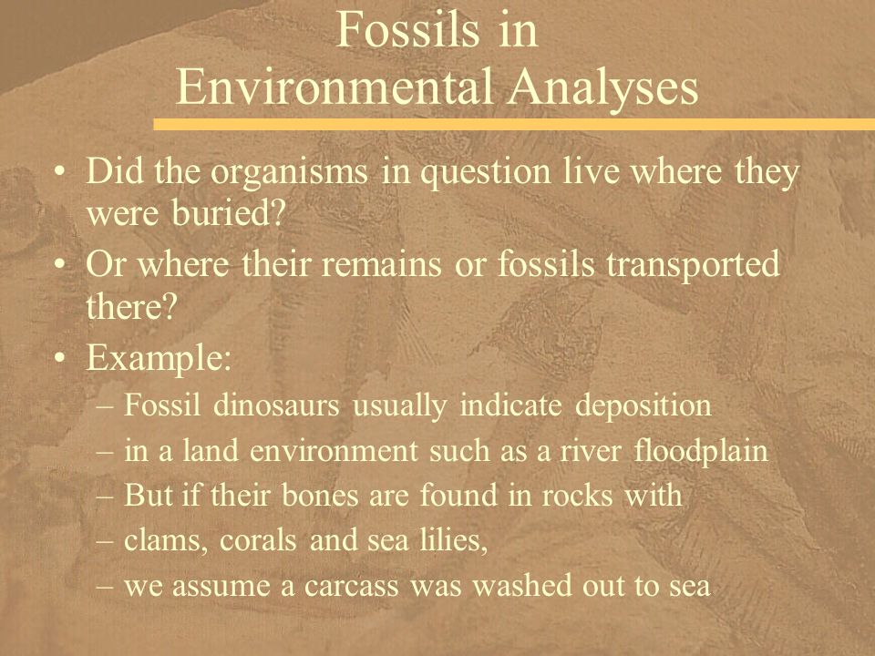Did the organisms in question live where they were buried? Or where their remains or fossils transported there? Example: –Fossil dinosaurs usually ind