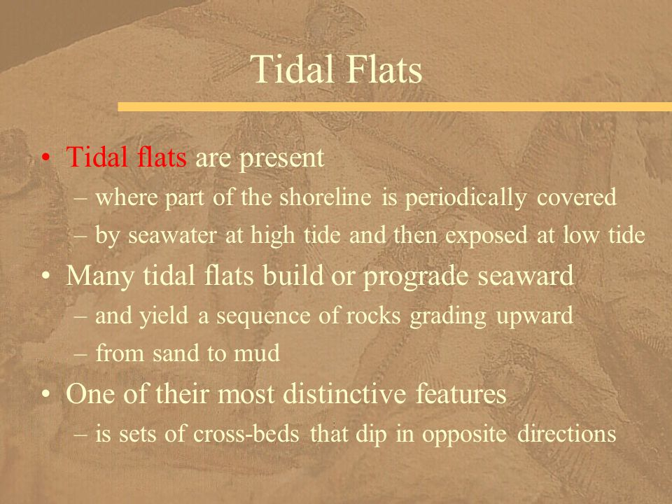 Tidal flats are present –where part of the shoreline is periodically covered –by seawater at high tide and then exposed at low tide Many tidal flats b
