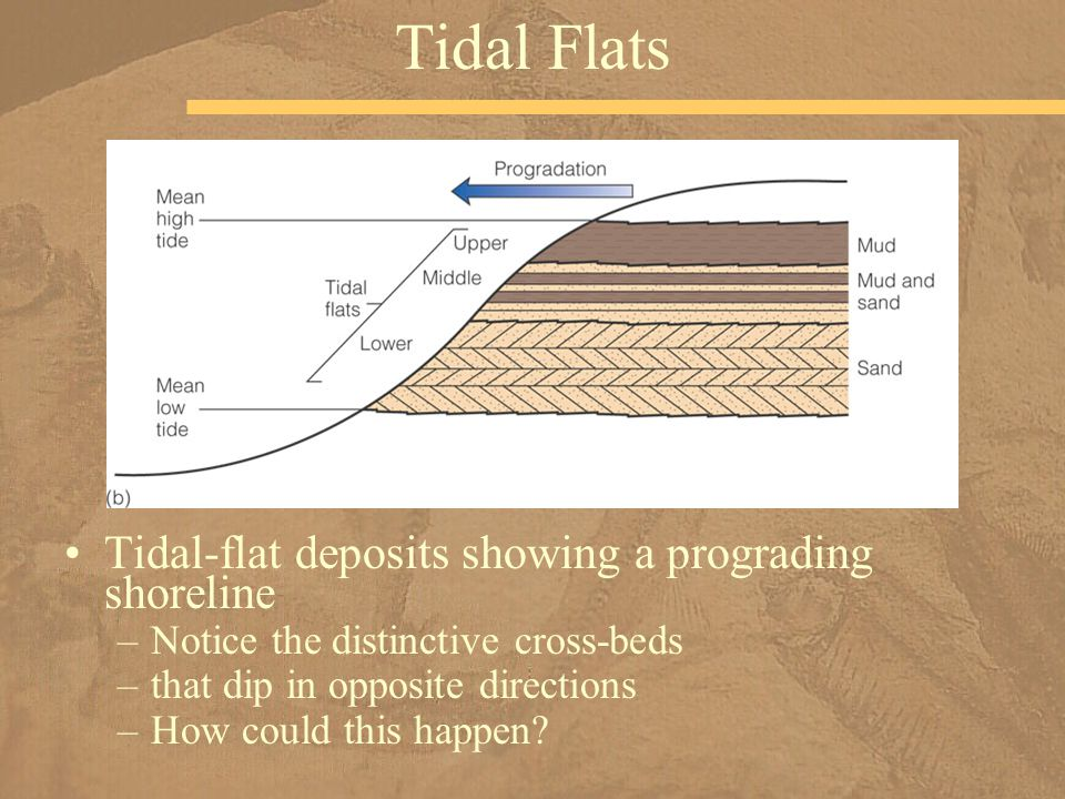 Tidal-flat deposits showing a prograding shoreline –Notice the distinctive cross-beds –that dip in opposite directions –How could this happen? Tidal F