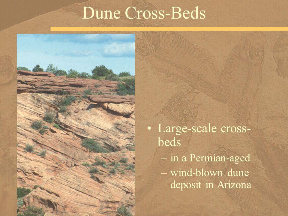 Large-scale cross- beds –in a Permian-aged –wind-blown dune deposit in Arizona Dune Cross-Beds