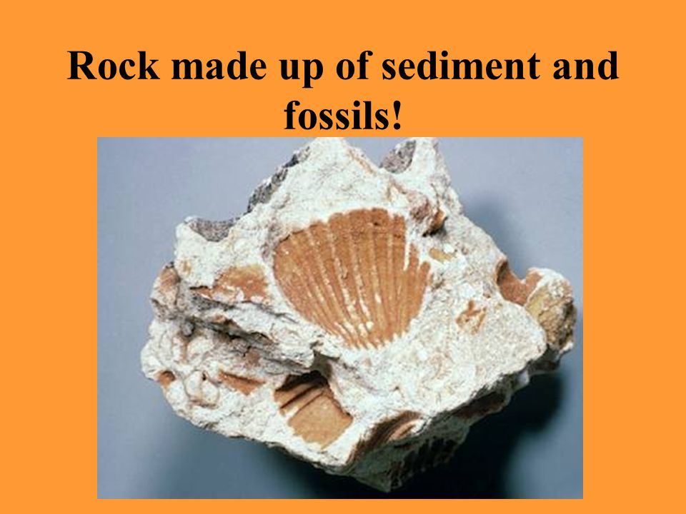 Rock made up of sediment and fossils!