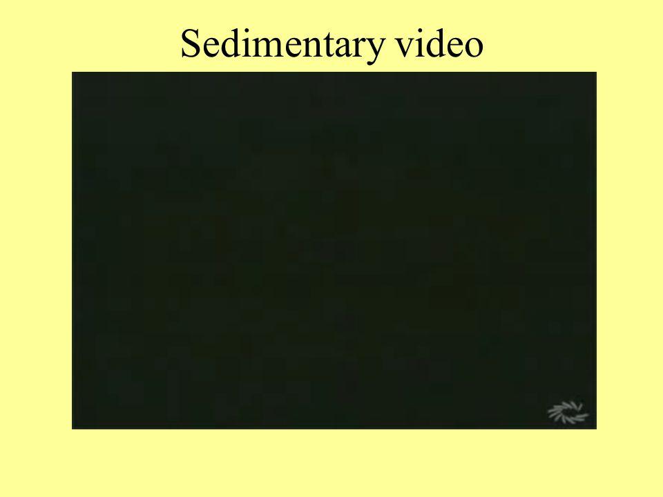 Sedimentary video