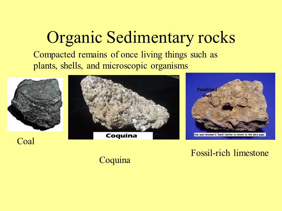Organic Sedimentary rocks Compacted remains of once living things such as plants, shells, and microscopic organisms Coal Coquina Fossil-rich limestone