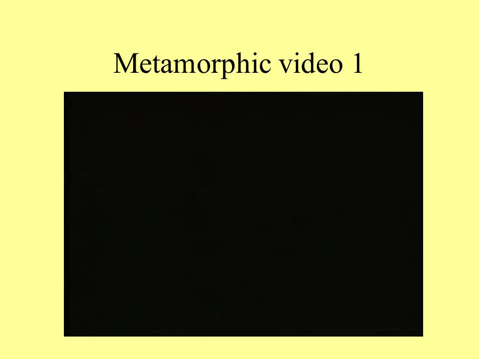 Metamorphic video 1