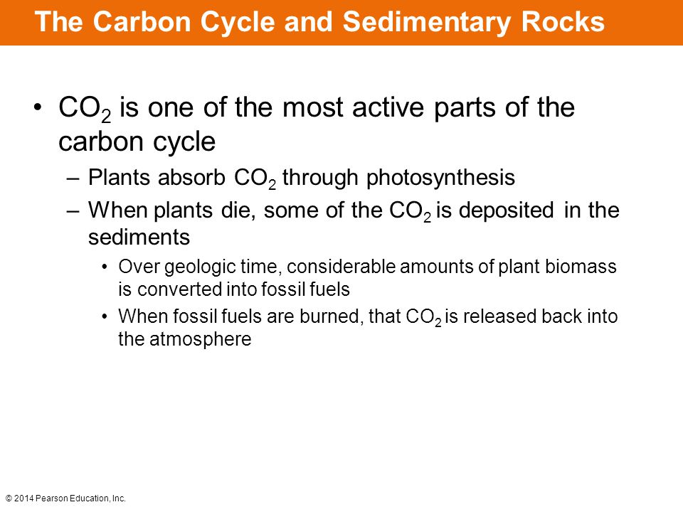© 2014 Pearson Education, Inc. The Carbon Cycle and Sedimentary Rocks CO 2 is one of the most active parts of the carbon cycle –Plants absorb CO 2 thr