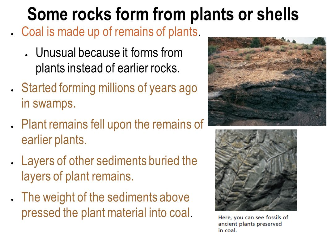 Some rocks form from plants or shells  Coal is made up of remains of plants.  Unusual because it forms from plants instead of earlier rocks.  Start