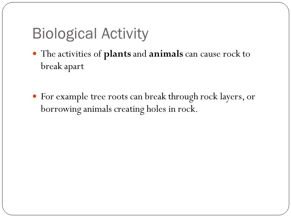 Biological Activity The activities of plants and animals can cause rock to break apart For example tree roots can break through rock layers, or borrow