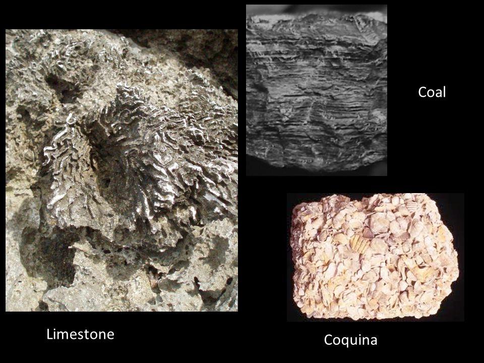 Coal Coquina Limestone
