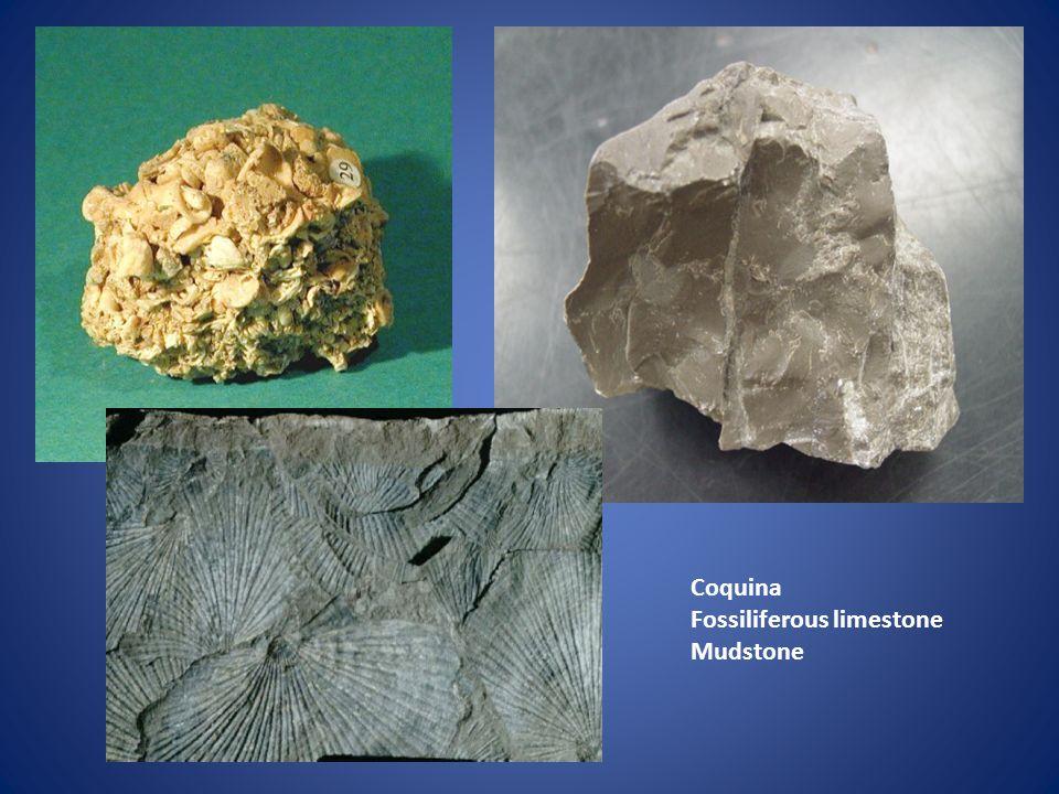 Coquina Fossiliferous limestone Mudstone