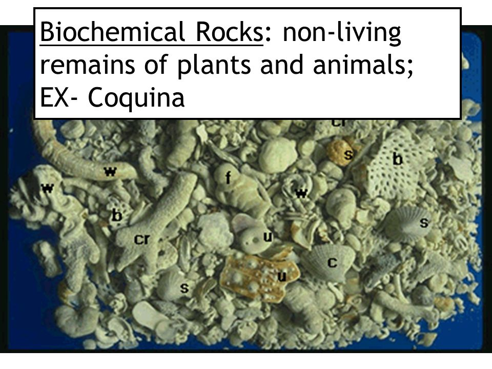 Biochemical Rocks: non-living remains of plants and animals; EX- Coquina