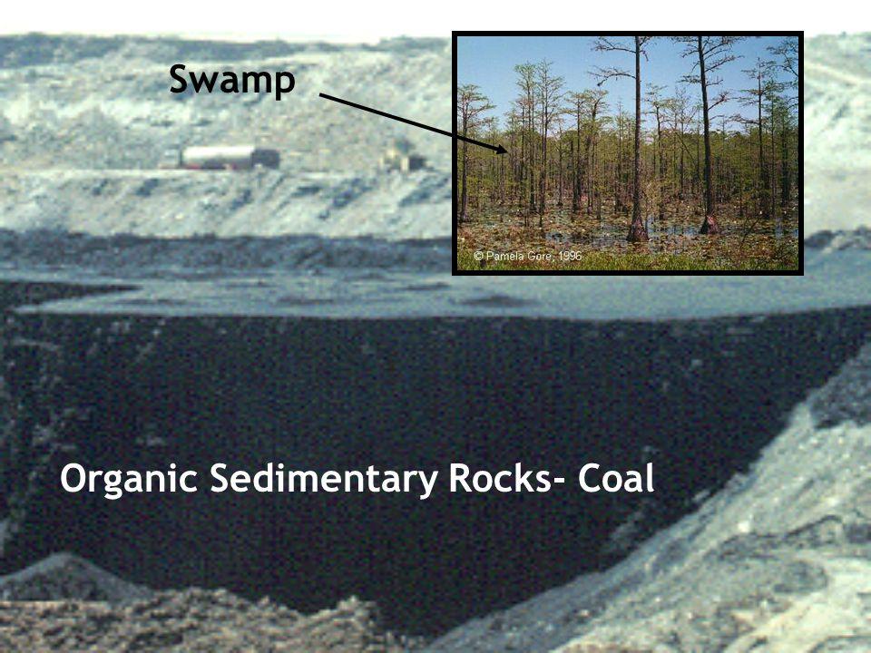 Organic Sedimentary Rocks- Coal Swamp