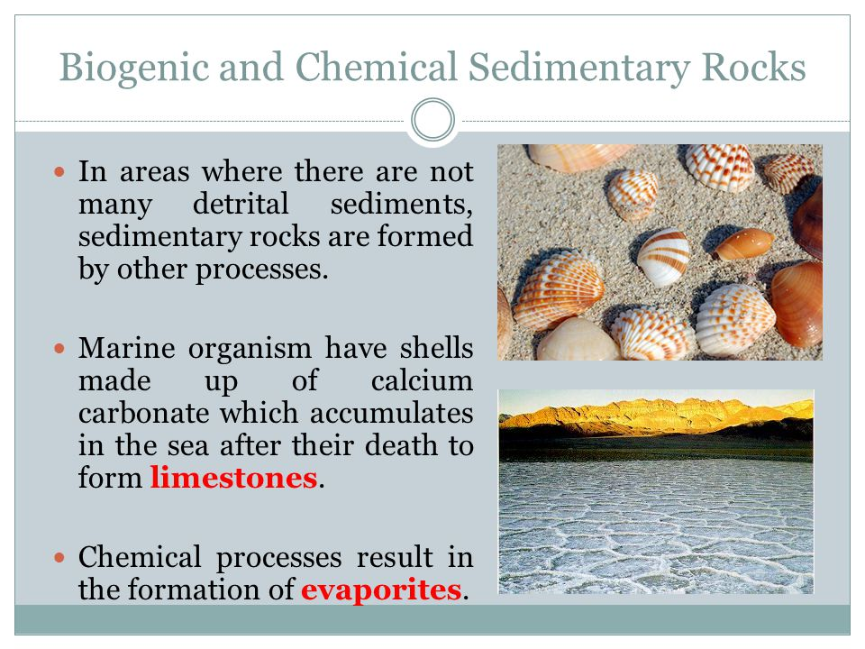 Biogenic and Chemical Sedimentary Rocks In areas where there are not many detrital sediments, sedimentary rocks are formed by other processes. Marine