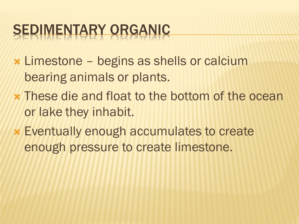  Limestone – begins as shells or calcium bearing animals or plants.