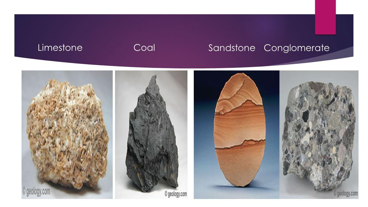Limestone Coal Sandstone Conglomerate