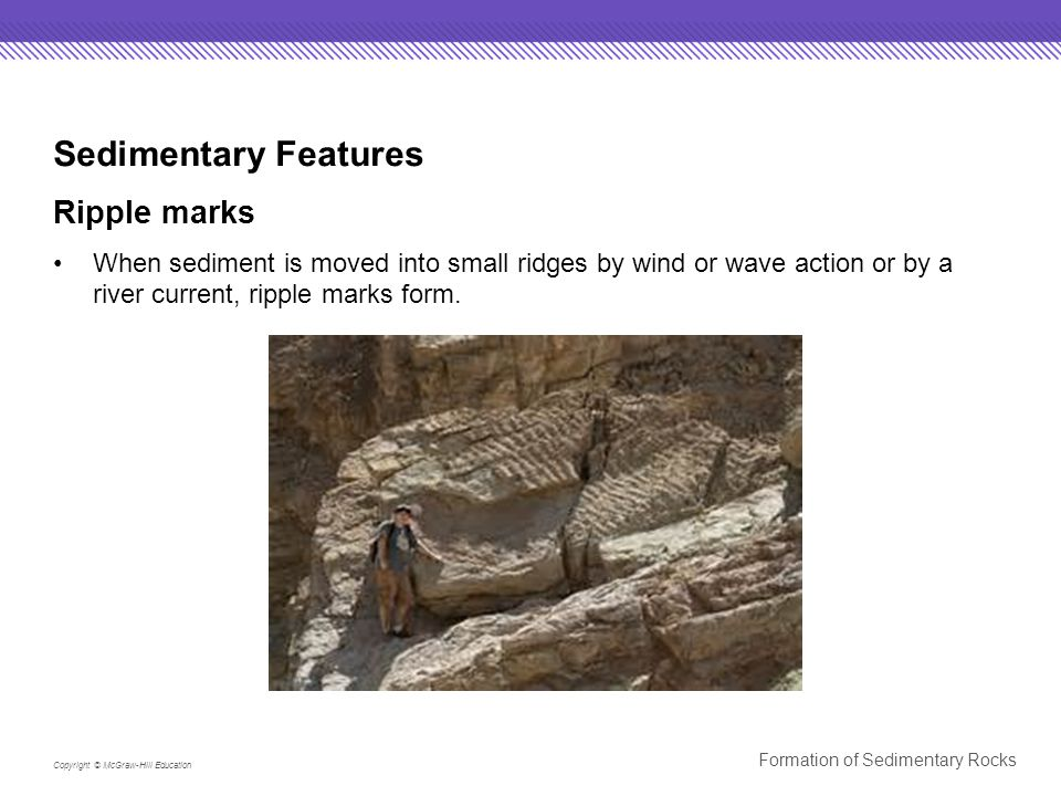 Copyright © McGraw-Hill Education Formation of Sedimentary Rocks Sedimentary Features Ripple marks When sediment is moved into small ridges by wind or wave action or by a river current, ripple marks form.