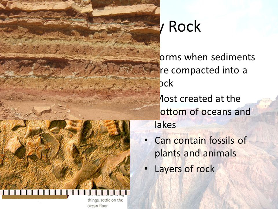 Sedimentary rock Strata Forms when sediments are compacted into a rock Most created at the bottom of oceans and lakes Can contain fossils of plants and animals Layers of rock