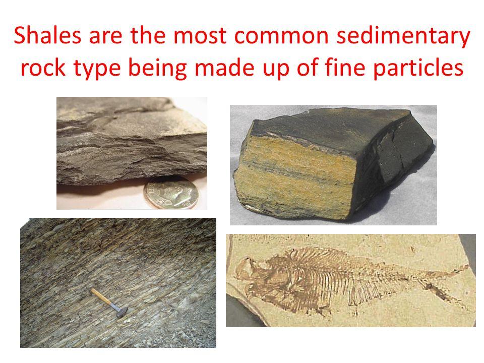 Common types of sedimentary rocks Shales Mudstones Sandstones Limestones Evaporites (such as salt beds)
