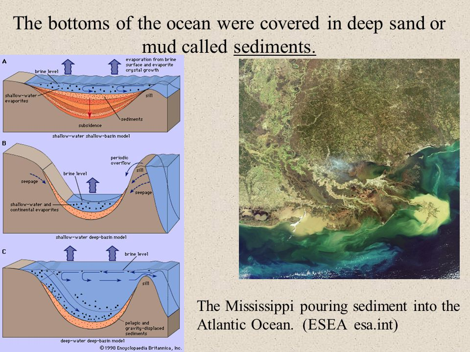 The bottoms of the ocean were covered in deep sand or mud called sediments.