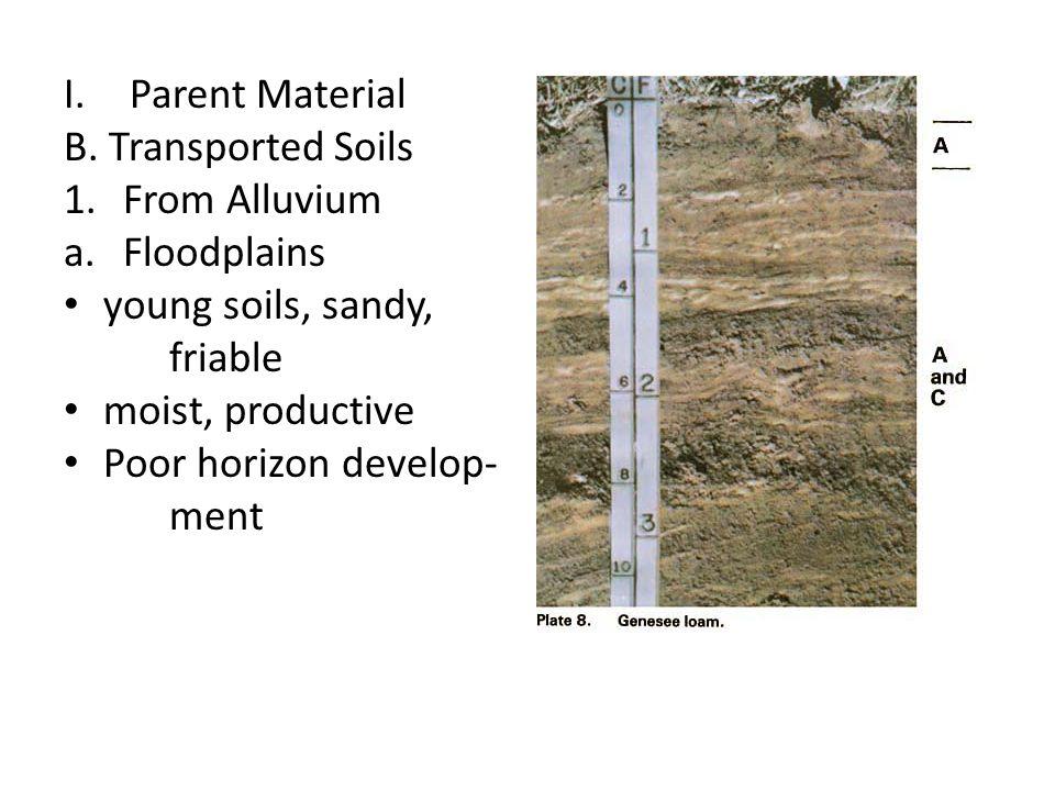 I.Parent Material B. Transported Soils 1.From Alluvium a.Floodplains young soils, sandy, friable moist, productive Poor horizon develop- ment
