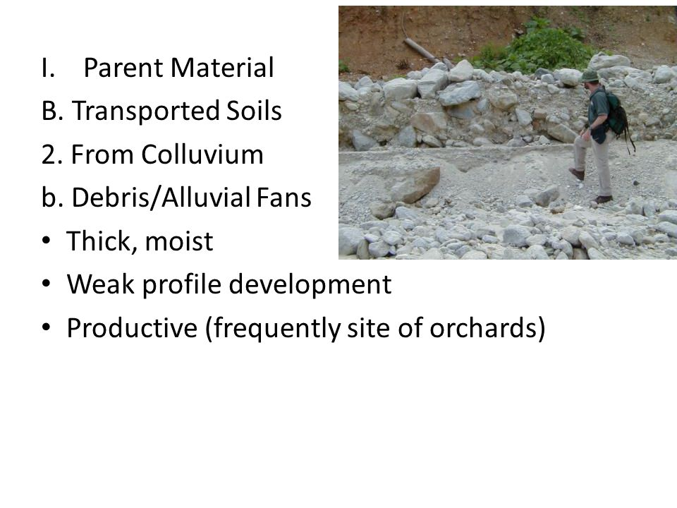I.Parent Material B. Transported Soils 2. From Colluvium b. Debris/Alluvial Fans Thick, moist Weak profile development Productive (frequently site of